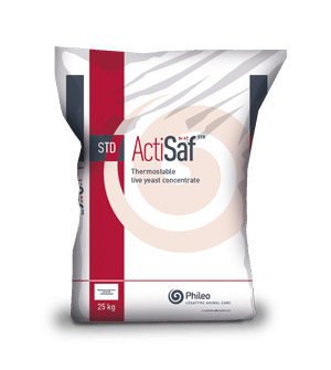 Thermostable live yeast concentrate - Actisaf STD